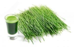 wheatgrass7